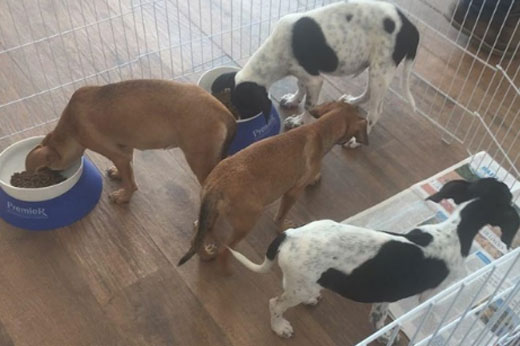 Feira de adoção de animais continua neste sábado  e domingo